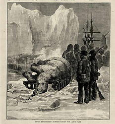 Sir George Strong Nares Arctic Explorers - Polar Bear Hunting In The Arctic 1875