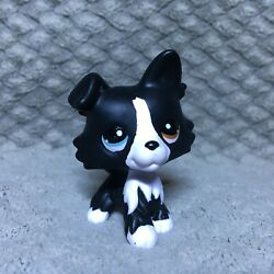 Littlest Pet Shop Border Collie ooak custom Two Different Colored Eyes