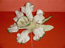 crown naples white orchid