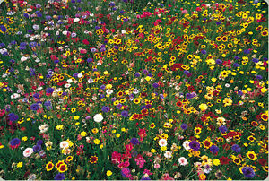 wildflower mix, WILD FLOWER 100% seed 1 POUND LB SEEDS! GroCo buy US made in USA