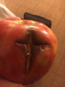 MIRACLE APPLE CROSS!!!!!!!!!!!!! Still in tact in my freezer!!!!!!!