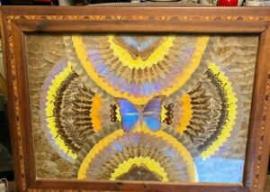 Vintage Real Moth Butterfly Wings Natural Art Taxidermy Kaleidoscope Framed
