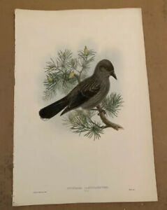 John Gould  Birds Of Great Britain Lithograph 1862-73