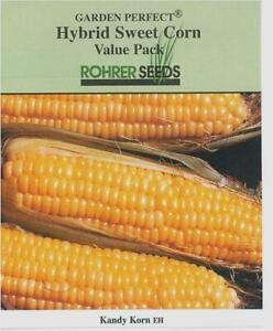 KANDY KORN yellow sweet corn-FREE SHIPPING