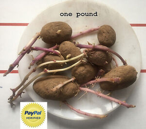 Russet Seed Potatoes, NON GMO One ₵ shipping Certified