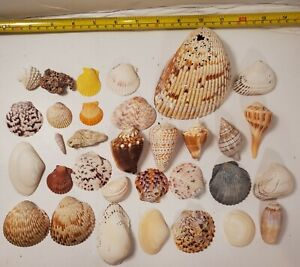 Lot of 32 Seashells & Coral Nautical Ocean Beach Shell Decor