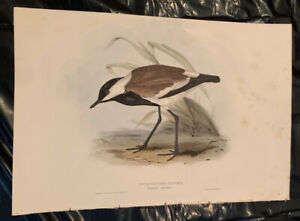 John Gould Spur Winged Plover Birds Of Europe. Lithograph 1832 37 $20.00