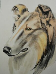 Vintage G. Reggio? Hand Colored Etching of a Scotch Collie 10quot; x 12.5quot; $78.00