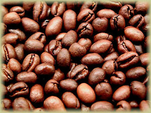 Tanzania Peaberry Coffee Beans, Medium Roasted Daliy 2 / 1 Pound Bags