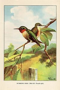 1926 Vintage TODHUNTER BIRDS