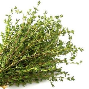 Common Thyme Herb seeds You Choose Packet size Winter German Free Ship #195