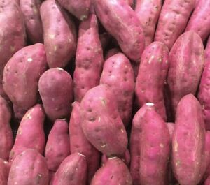 3 LBS Fresh Japanese Murasaki Sweet Potatoes Fresh Yam Root Free Shipping