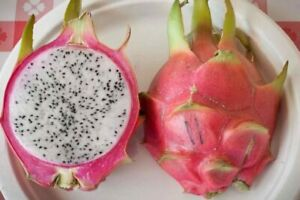 Bien Hoa White, Dark Pink Skin, White Flesh Dragon Fruit 2 new Cuttings 8