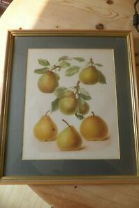 Chromolithograph Original Print of pears  Edith E Bull from The Herefordshire