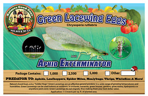 NaturesGoodGuys Green Lacewing Eggs 1000 A Natural Aphid Predator