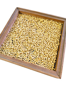 Clear Hilum!! SoyPro NON-GMO Soybeans for Soy Milk, Tofu & Sprouts 10 - 20 lbs.