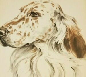 ENGLISH SETTER Full Face Dog DIANA THORNE Animal Artist Vintage Print 1944 $32.47