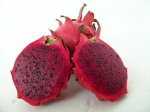 Bloody Mary, Dark Pink Skin, Dark Red Flesh Dragon Fruit 2 new Cuttings 8