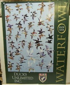 Ducks Unlimited Know Your Waterfowl Poster ID Ducks Geese Identification DU