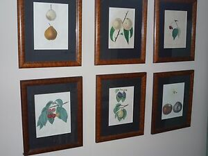 Six framed antique stone carved lithographs hand tinted NY state fruit