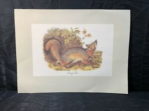 Vtg Audubon Animal Lithograph Print Grey Fox From Imperial Collection USA Print $45.00