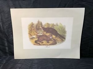 Vtg Audubon Animal Lithograph Print Mink From Imperial Collection USA Print $45.00