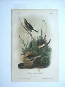 Sharp-Tailed Finch Audubon Color Print 1850s Octavo Edition Plate #174 Antique