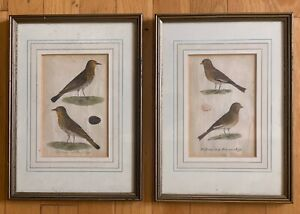 """TWO ANTIQUE LITHOGRAPHS BIRDS 11"""" X 8"""" FRAMED ART WORK SOTHEBY'S VERY OLD MUSEUM $324.99"""