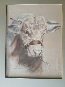 Stunning portrait White Bull by Janice Gordon acclaimed animal artist with frame GBP 150.00