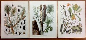 Three Antique Prints ENTOMOLOGY Insects L H JOUTEL Chromolithography FASCINATING $27.88
