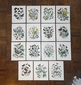 Authentic Antique 19th Century Chromolithographs-ButterfliesMoths-Set of 15 $365.00