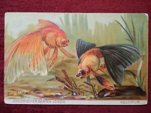 ANIMAL ARTIST SIGNED POSTCARD FISH AQUARIUM ZOOLOGISCHER GARTEN 1916 $10.00