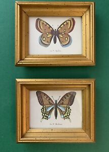 Pair Of Vintage French Arthur Kaplan Butterfly Lithograph Prints Framed