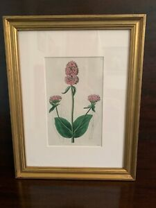 Framed Antique Original Botanical Print 1827 Ridgeway The Botanical Register $55.00