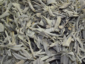 SAGE WHITE SMUDGE CALIFORNIA WHITE SMUDGING SAGE FREE DIRECTIONS 1/2 oz to 1 Lb