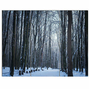 'Thick Woods in Winter Forest' 3 Piece Photographic Print on Wrapped Canvas Set