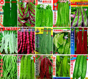 Vegetable Cowpea green bean Lentils Seeds Large Colorful retail package 豇豆角扁豆荷兰豆
