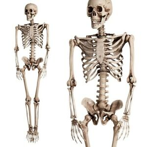 5.6ft Halloween Poseable Human Skeleton Full Life Size Props Party Decoration