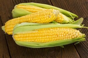 Fresh Corn on the Cob in the Husk (6 ears perorder) from Florida