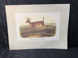 Vtg Audubon Animal Lithograph Print Columbian White Tailed Deer Imperial Coll. $45.00
