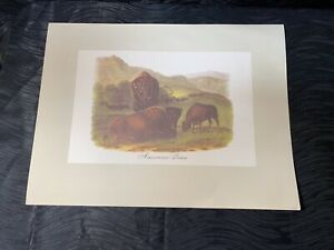 Vtg Audubon Animal Lithograph Print American Bison From Imperial Collection $45.00