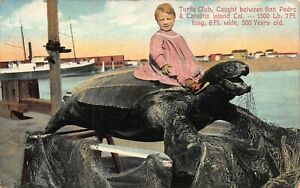 CA 1900's RARE Turtle Caught between San Pedro & Catalina Island, California