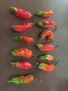 12 FRESH PICKED RED GHOST PEPPERS (2nds)