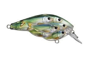 Live Target Bait Ball Yearling Blue Chartreuse Shad 1 7 8quot; 1 4 oz YSB50S817 NEW