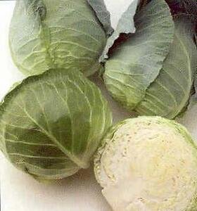 Cabbage Early Flat Dutch Vegetable Seeds