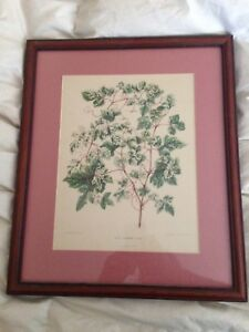 Antique 19th century Botanica Belgian Chromolithograph Mat Framed $29.00