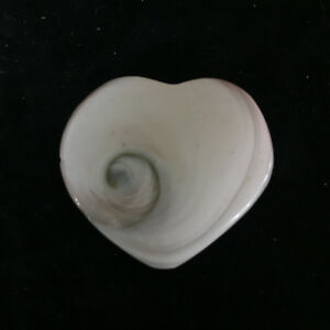 (3PCS) Natural Shell Fossil Crystal Craft Conch Heart Specimen Reiki Healing