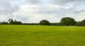 Developer's dream! open level land for sale great location  in Alabama
