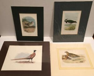 4 Antique 19th & Early 20th Century Bird Lithographs Xlnt Condition $15.00