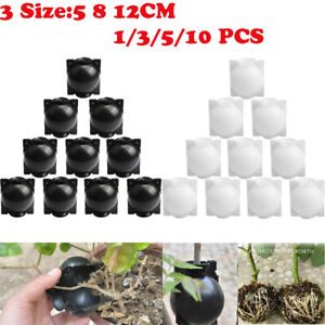 3/5/10PCS Plant Root Growing Box - FREE FAST SHIPPING